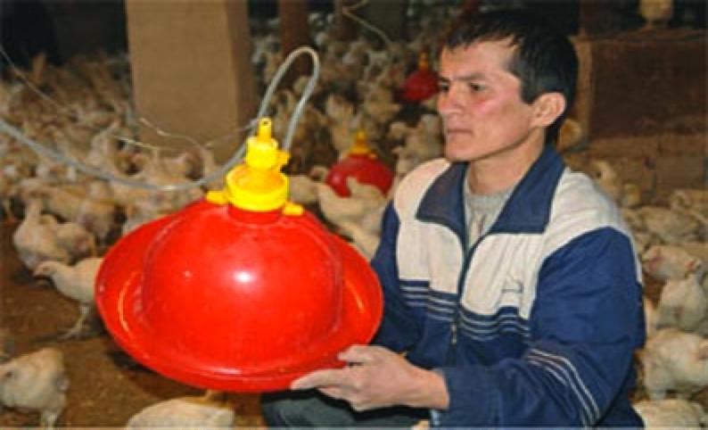 uzbek1